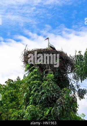 Storch im Nest. Storch in sein Nest bei warmem Wetter stehen - Stockfoto