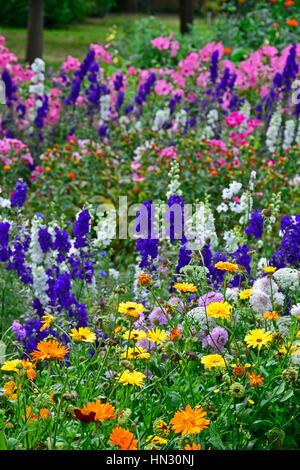 Wilden und bunten Pflanzen Tagetes Tagetes und Rittersporn - Stockfoto
