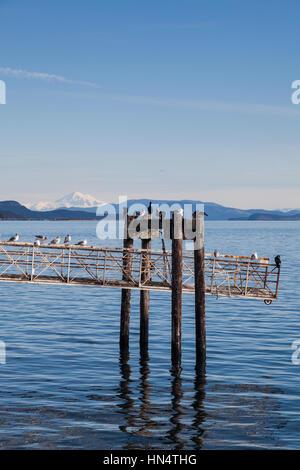 Kormorane und Möwen auf einem erhöhten Steg über dem Ozean - Stockfoto