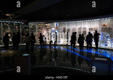 National Museum of Nature and Science, Tokyo, Japan, Asien. Japaner, Touristen, Urlauber, die bei Tieren in Ausstellung - Stockfoto