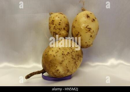 Kartoffelfamilie von 1 geformt wie eine Maus mit großen Ohren Nummer 34 47 - Stockfoto
