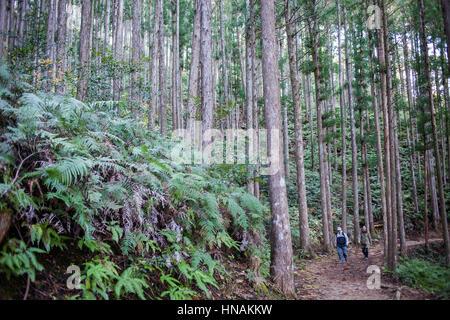 Pilger in Kumano Kodo in der Nähe von Hosshinmon-Oji, Nakahechi Route, Wakayama, Kinki, Japan - Stockfoto