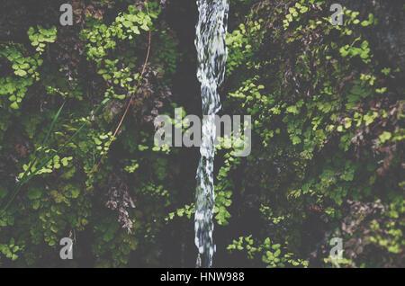 Süßwasser Stream von üppigen grünen Wachstums - Stockfoto