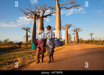 Madagassische Frauen an der Allee der Baobabs, Morondava, Baobab Allee, Adansonia grandidieri, westlichen Madagaskar, - Stockfoto