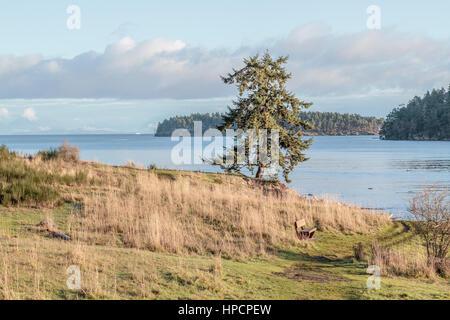 An einem sonnigen Wintertag der Park ist menschenleer, nur mit einem einsamen Baum und Sitzbank mit Blick auf die - Stockfoto