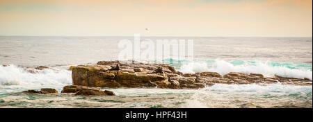 Panorama der südafrikanischen Seebären (Arctocephalus percivali) auf der Insel vor dem Kap der guten Hoffnung, Kap - Stockfoto