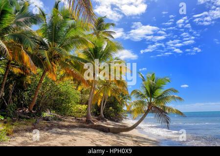Tropischen weißen Sandstrand mit Palmen. Isla Saona, Dominikanische Republik - Stockfoto