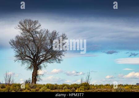 Einzigen Baum in der Wüste mit blauen Wolkenhimmel.  Geringe Schärfentiefe mit Fokus auf Baum. - Stockfoto