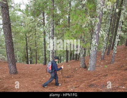 Reife Frauen Wanderer im Pinienwald in Bergen auf Gran Canaria, Kanarische Inseln, Spanien. - Stockfoto