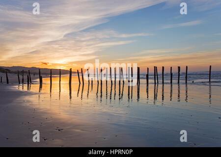 Dunedin, Otago, Neuseeland. Blick entlang St Clair Beach bei Sonnenaufgang, legendäre Reihe von Holzpfählen spiegelt - Stockfoto