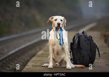 Hund ist für den Besitzer auf dem Bahnsteig warten. - Stockfoto
