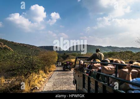 Touristischen Naht, Royal Bengal Tiger und andere wilde Tiere im Ranthambore Tiger Reserve mit Wald-Fahrzeugen finden - Stockfoto