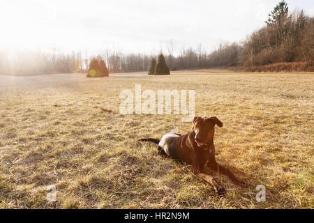 Großer schwarzer Hund im Hundepark. - Stockfoto