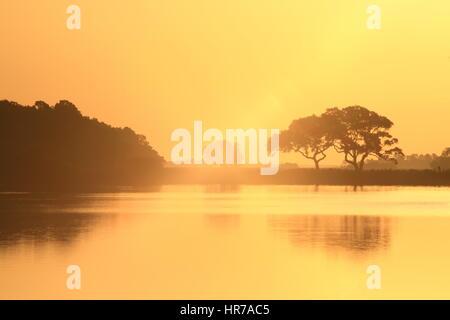 Sonnenaufgang am Bass Teich auf Kiawah Island, South Carolina. Der Himmel ist golden und spiegelt sich hübsche Live - Stockfoto