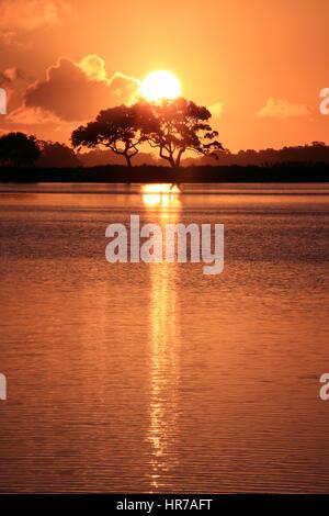 Zwei Eichen-Bäume sind gegen eine leuchtende orange Sky am Bass Teich auf Kiawah Island, South Carolina Silhouette. - Stockfoto