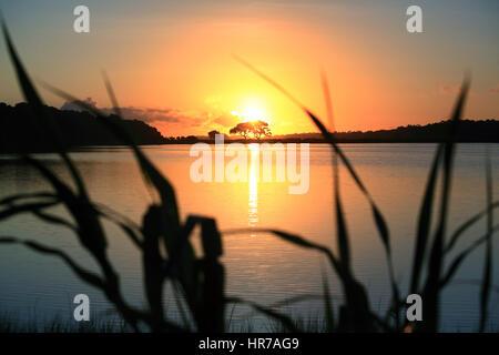 Eine Live-Eiche ist gegen die aufgehende Sonne auf Kiawah Island, South Carolina Silhouette. Die Sonne spiegelt - Stockfoto