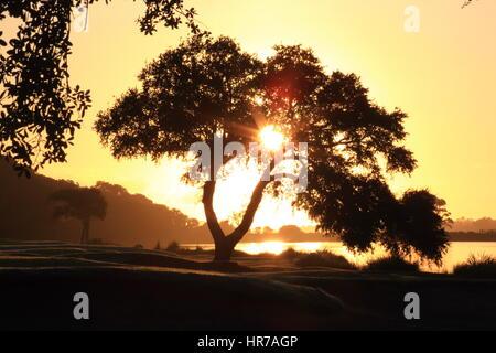 Sonnenaufgang auf einem Golfplatz auf Kiawah Island, South Carolina. Die Sonne schafft ein Sunburst durch die Äste - Stockfoto