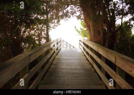 Ein Holzsteg führt durch Pinien und ranken an den Strand in Kiawah Island, South Carolina. - Stockfoto