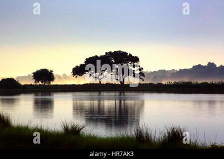 Zwei Eichen-Bäume sind gegen eine beruhigende blauen Himmel mit Morgenlicht auf Kiawah Island, South Carolina Silhouette. - Stockfoto