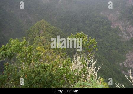 Üppige Vegetation, Blick von einem Aussichtspunkt Mirador in die Schlucht in Los Tilos Forest in La Palma, Kanarische - Stockfoto