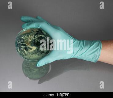 Erde in einer Petrischale - Stockfoto
