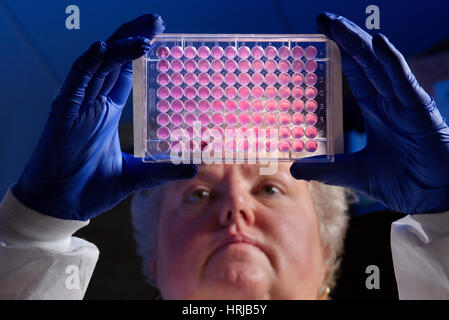 Antibiotika-Forschung - Stockfoto