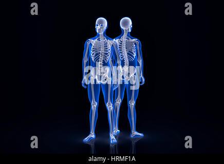 Menschliches Skelett. Vordere und hintere Ansicht. Clipping-Pfad enthält - Stockfoto