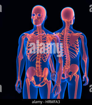 Menschliches Skelett hautnah. Vordere und hintere Ansicht. Clipping-Pfad enthält - Stockfoto