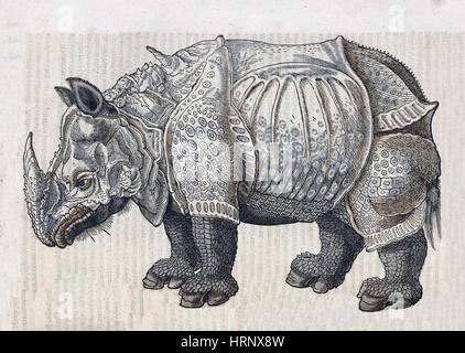 Nashorn, Historiae Animalium, 16. Jahrhundert - Stockfoto