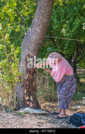 alte Bäuerin hacken Baum im Wald - Stockfoto