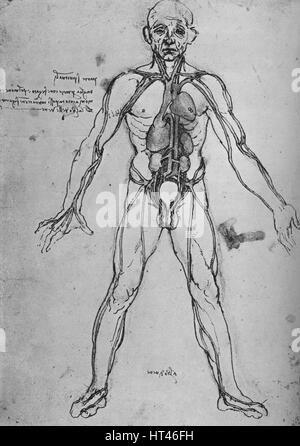 anatomische Zeichnung von Lunge und Herz von Leonardo da Vinci 1513 ...