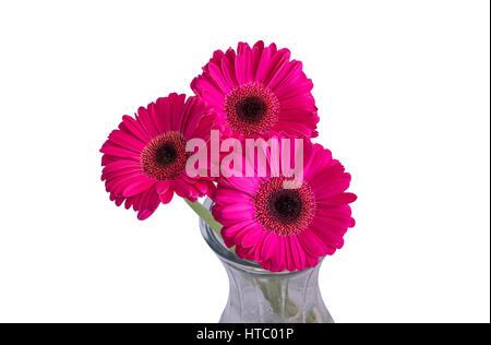Drei Rosa Gerbera Daisy Blumen für die Vase isoliert. weißen ...