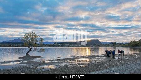 Wanaka, Otago, Neuseeland. Sammeln von Fotografen vorbereiten der ikonischen Weidenbaum schießen auf die Ufer des Lake Wanaka, Sonnenaufgang.