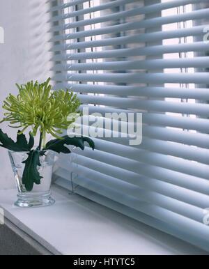 Einzelne lindgrün Chrysantheme in einer Glasvase auf der Fensterbank unter Fenster mit einem weißen Lattenrost blind - Stockfoto