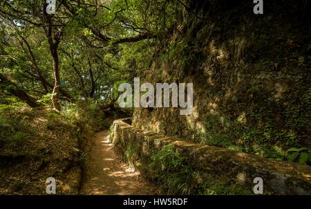 Weg im Regenwald auf Madeira. Es gibt Wand bedeckt mit Moos der Strom des Wassers verwendet für die Kultivierung - Stockfoto