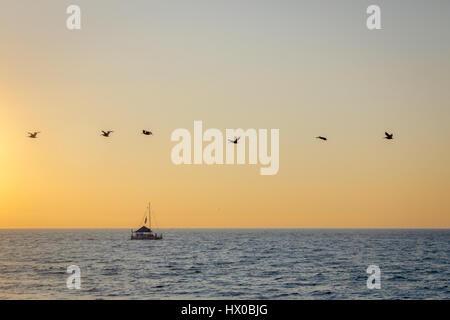 Gruppe von Pelikane fliegen am Strand bei Sonnenuntergang - Puerto Vallarta, Jalisco, Mexiko - Stockfoto