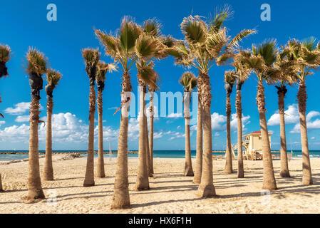 Palmen am Strand von Tel Aviv Sand, Israel. - Stockfoto