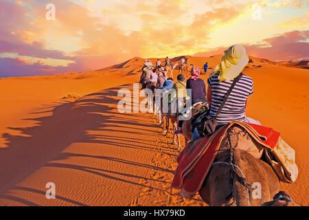 Kamel-Karawane durch die Sanddünen in der Sahara Wüste, Marokko. - Stockfoto