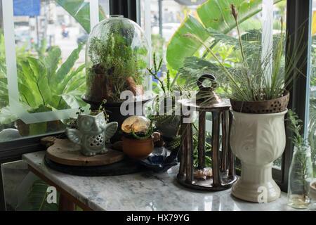ein kleines glas terrarium mit pflanzen im inneren stockfoto bild 67602747 alamy. Black Bedroom Furniture Sets. Home Design Ideas
