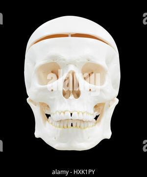 Totenkopf Bild isoliert mit Beschneidungspfad - Stockfoto
