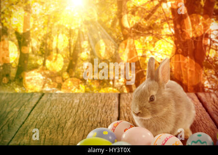 Hase mit gemusterten Ostereier gegen ruhige Herbst Szene im Wald - Stockfoto