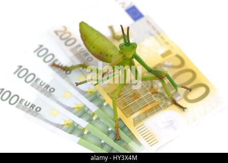 Heuschrecke auf Banknoten, Hedge-Fonds, Heuschrecke Auf Geldscheinen, Hedge-Fonds - Stockfoto