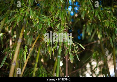 Bambus Wald Hintergrund Fur Naturliches Konzept Design Stockfoto