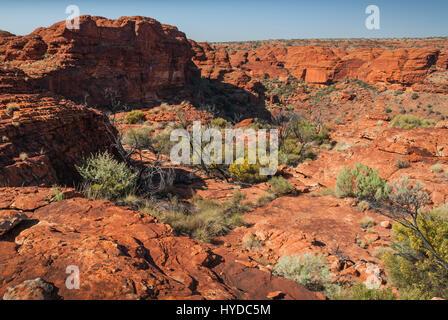 Rostige roten Felsen und Scortched Pflanzen an der Spitze des Kings Canyon in den australischen Northern Territories. - Stockfoto