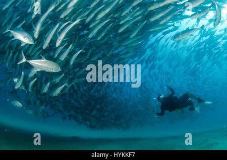 Nationalpark CABO PULMO, Mexiko: Genießen Sie Ihre Augen auf einem zwanzig tausend Jahre alten Unterwasser Schatztruhe - Stockfoto