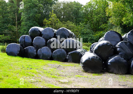 Silageballen gewickelt in schwarzen Plastikplanen, Cumbria UK. - Stockfoto