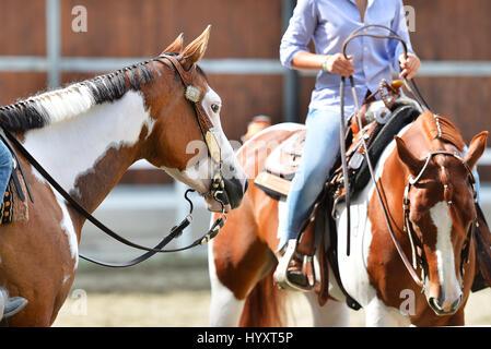 Malen Sie Pferd Porträt auf Messe, bereit zu konkurrieren - Stockfoto