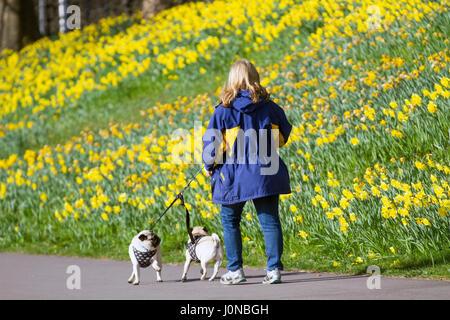 Aberdeeen, Schottland, Großbritannien. UK Wetter. 15. April 2017. Spaziergang mit dem Hund auf einem hellen und - Stockfoto