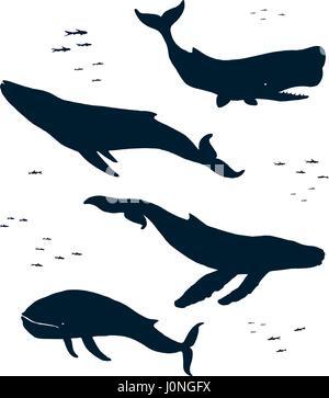 Meeressäuger. Silhouette - Stockfoto