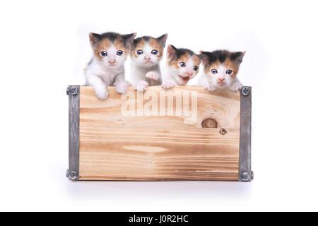 Entzückende Box 3 Wochen alten Baby Kätzchen warten angenommen werden - Stockfoto
